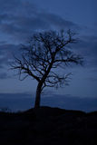 Tree on background night sky Stock Photography
