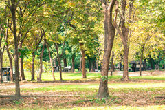 The tree background in park of Thailand Royalty Free Stock Photo