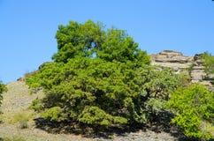 Tree on a background of rocky ridges. Stock Photos