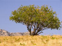 Tree on a background of the sky Stock Image