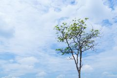 Tree background is sky royalty free stock images