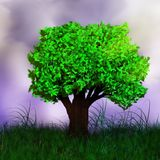 The tree on a background of storm clouds. Tree on a background of storm clouds. Sunlight rays break through thunderclouds. Dark shadow on green grass. Tall grass Royalty Free Stock Photography