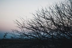 Tree on a background of a sunset. Brunches backlight orange sunr Royalty Free Stock Photo
