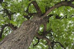 Tree background Stock Photo