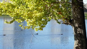 Tree on a background of water in autumn stock video footage