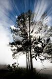 Tree Backlight Backlit Sunbeams Rays Beams of Light Stock Images