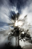 Tree Backlight Backlit Sunbeams Rays Beams of Light Royalty Free Stock Photography