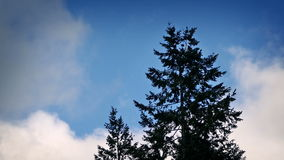 Tree Backlit By Dramatic Blue Sky. Tree dark against blue sky on sunny day stock video footage