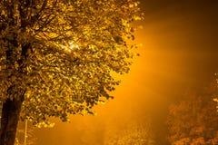 Tree, Backlit by streetlight, Ventspils, Latvia Royalty Free Stock Image