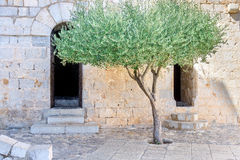 Tree in backyard. Tree in the backyard of an old castle in the South of Spain nearby the sea royalty free stock photos