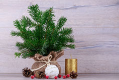 Tree in bag Royalty Free Stock Photo