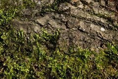 Tree balk with and moss in sun, Austria. Tree balk with fir needles and green moss in sun, Austria Stock Photos