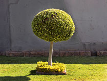 Tree Ball Shape Art Royalty Free Stock Photography