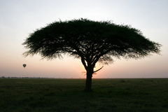 Tree and balloon at sunset. African tree and balloon at sunset Stock Photo