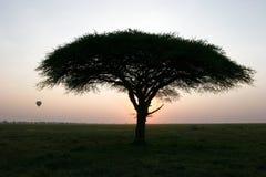 Tree and balloon at sunset Stock Photo