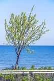 Tree at the Baltic Sea Royalty Free Stock Photos