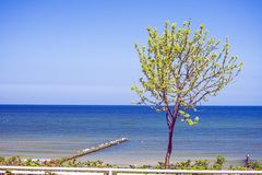 Tree at the Baltic Sea Stock Image