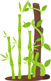 Tree with bamboo Stock Image