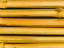 Tree a bamboo trunks Stock Image