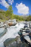 Tree on the bank of the rapid mountain river. Under blue cloudy sky Stock Photos