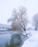 Tree on the bank of the river. In snowfall stock image