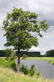 Tree on the bank of the river Stock Image