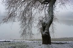 Tree on the bank of the winter lake. Beach resort lake in winter, trees covered with frost on the shore Stock Photography