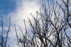 Tree with bare branches against the sky.  Royalty Free Stock Photography