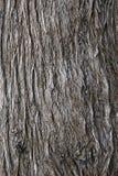 Tree bark. Detail closeup shot of a tree bark Stock Images