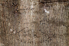 Tree Bark. Close up photograph of tree bark, maybe suitable as a background Royalty Free Stock Image