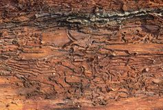 Tree bark Stock Image