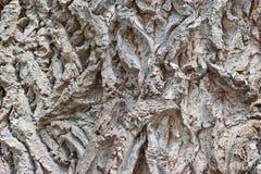 Tree bark stock photography
