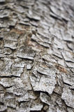 Tree bark. A abstract background of a tree bark texture Royalty Free Stock Images