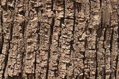 Free Tree Bark Royalty Free Stock Photography - 14319697