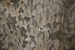 Tree bark Royalty Free Stock Photos