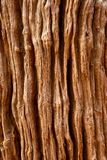 Tree bark Royalty Free Stock Images