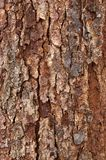Tree Bark #2 Royalty Free Stock Photo