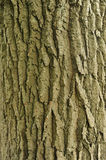 Tree Bark. Photograph of tree bark, the tree is an oak tree and was shot in natural light, object was on texture Stock Images