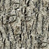 Tree Bark. Seamless Texture Tile from Photographic Original Royalty Free Stock Photography