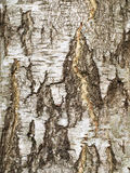 Tree bark. Close up of a birch tree bark Royalty Free Stock Photo