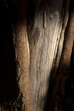 Tree bark. Photo of a particular tree bark with light and shadow Royalty Free Stock Image
