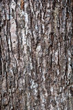 Tree bark. Close up texture of tree bark Stock Photo