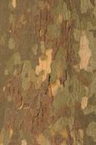 Tree Bark. A panel of bark from the london plane tree, making a abstract pattern Royalty Free Stock Photos