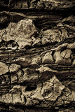 Tree Bark. A very rough patch of tree bark Stock Image