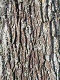 Tree bark. Pattern of tree bark texture stock image