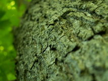 Tree bark. Close up on tree bark Stock Photos