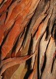 Tree bark. Textured eucalyptus tree bark suitable for background image Royalty Free Stock Image