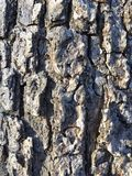 Tree bark Royalty Free Stock Image
