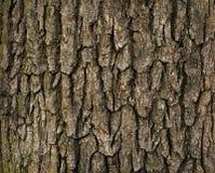 Free Tree Bark Stock Photography - 51507462