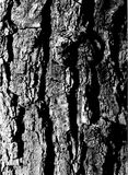 Tree bark. In black & white royalty free stock image